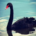 How to Mitigate Risk from Black Swans